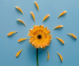 blue, design, and flower image