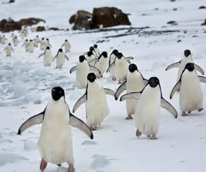 animal and penguin image