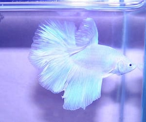 fish, white, and animal image