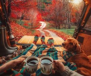 autumn, dog, and couple image