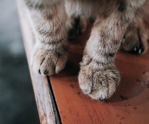 cat, animals, and paws image