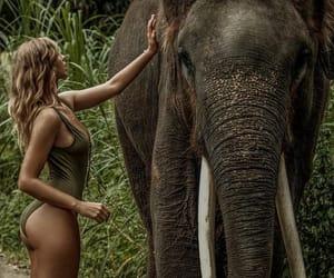 bali, elephant, and green image