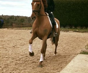 chestnut, equestrian, and ride image