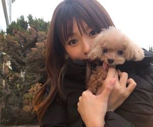 dog, instagram, and girl image