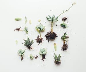 cactus, garden, and green image