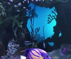 animal, color, and aquarium image