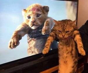cat, kitten, and simba image