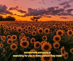 quotes, love, and sunflower image