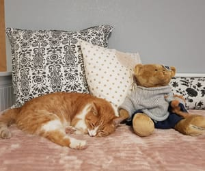 animals, cats, and sleep image