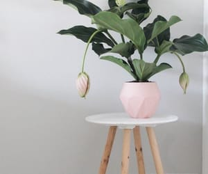 minimalist, plants, and Scandinavian image