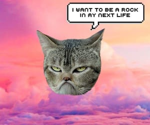 bored, cat, and edit image