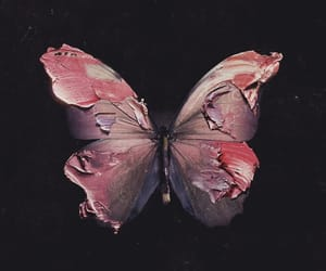 butterfly, paint, and pink image