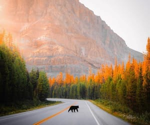 animals, bear, and dreamy image