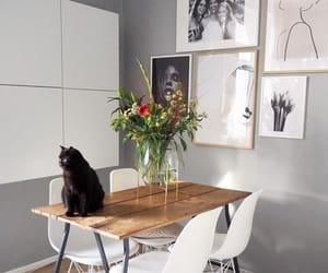 cat, design, and Dream image
