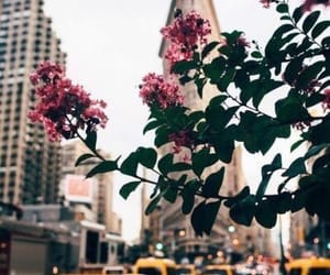 city, flowers, and usa image