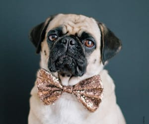 adorable, glitter, and pugs image