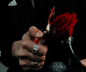 rose, fire, and red image