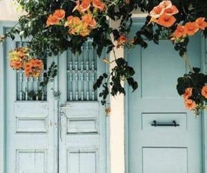 flowers, blue, and orange image