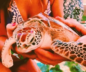 turtle, tropical, and cute image