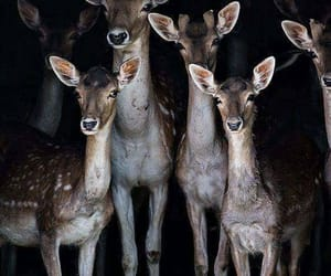 deer, doe, and family image