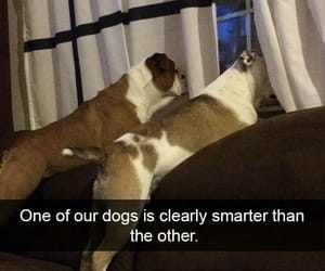 dogs, funny, and meme image