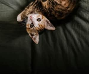 animals, cat, and photography image