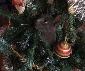 animal, christmas tree, and lights image