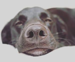 dog, animals, and love image