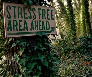 nature, forest, and stress image