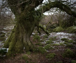 photographers on tumblr, snow, and wales image
