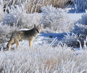 animals, wildlife, and frost image