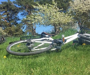 bicycle, green, and relax image