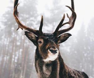 animal, winter, and deer image