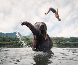 animals, elephant, and elephants image