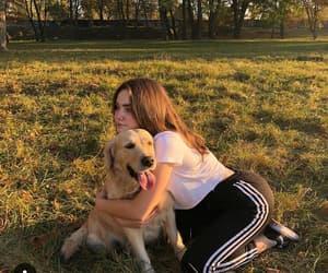 animal, dog, and photo image