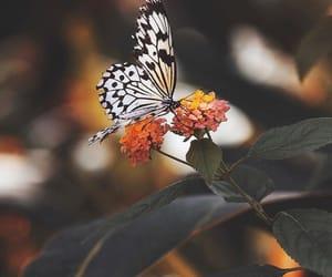 Image by mattamanga
