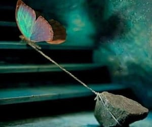 butterfly, possibility, and dreams image