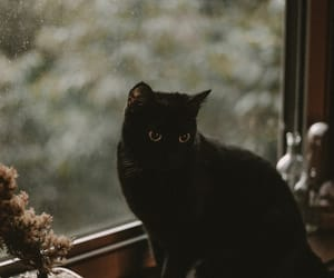 cat, aesthetic, and black image