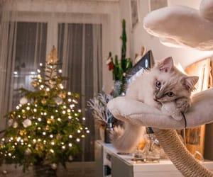 cat, christmas, and christmas lights image