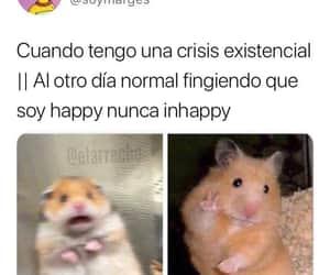 hamster, humor, and meme image