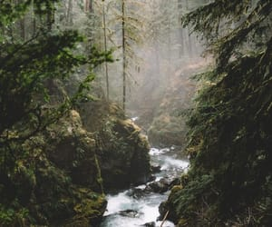 nature, forest, and river image