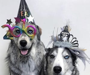 dog, happy, and new year image