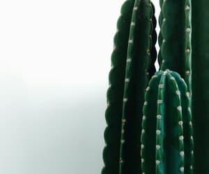 slow, kaktus, and klasik image