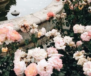 aesthetic, flowers, and beauty image