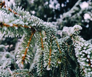 christmas tree, forest, and nature image