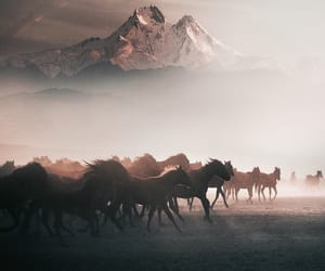 cavalos, horses, and tumblr image