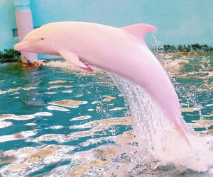 pink, dolphin, and water image