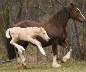 horse, colt, and horses image
