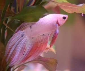 fish, pink, and cute image