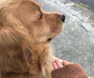 aesthetic, beige, and dog image